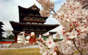 3-japan-sakura-blossom-temple-1
